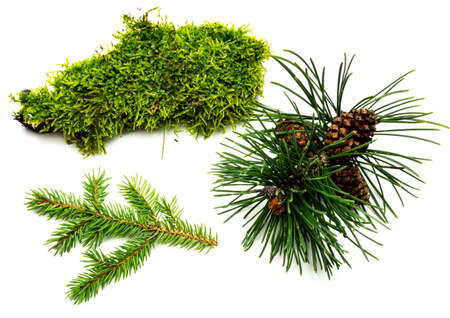 Moss fir and pine from the forest on white background