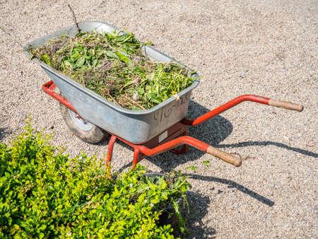 Wheelbarrow with green waste in the park Standard-Bild