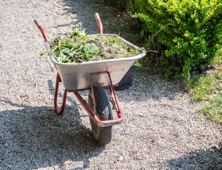 Wheelbarrow with green waste in the garden