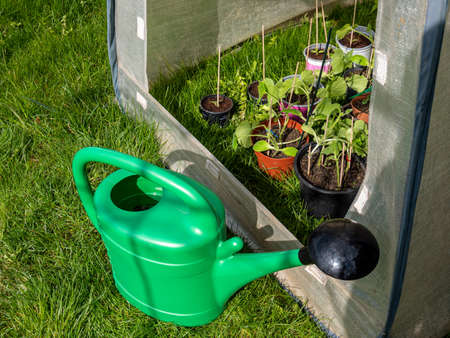 Cold frame stands with watering can in the garden