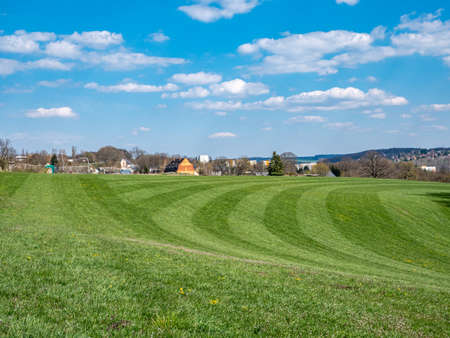Fresh green meadow in spring
