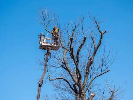 Tree clippings in spring with a lifting platform