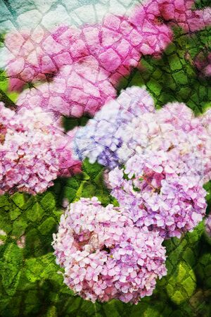 Double exposure of floral objects, day light Stock Photo