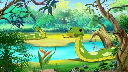 anaconda: Green Anaconda - the largest Snake. Digital painting  full color illustration.