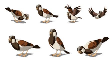eurasian: Digital painting of the Eurasian Tree Sparrows
