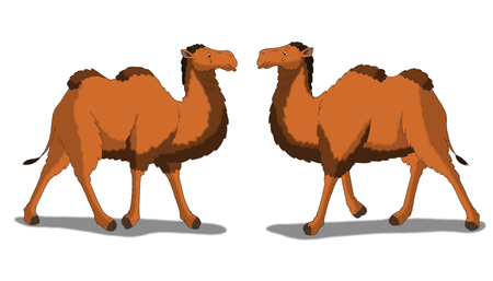 running camel: Digital painting of the Bactrian Camel