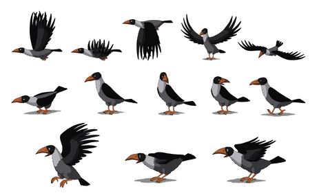 birds eye view: Set of Crow and Raven images. Digital painting  full color cartoon style illustration isolated on white background.