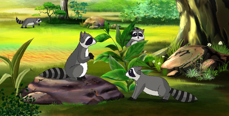raccoons: Raccoons family in a spring forest. Digital painting  cartoon style full color illustration. Stock Photo