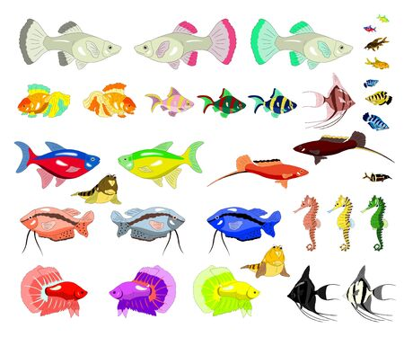 digital painting: Set of Aquarium Fish separate images. Digital painting  full color cartoon style illustration isolated on white background.