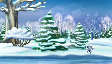 idyll: Snow-covered Pine Trees in a Winter Forest. Handmade illustration in a classic cartoon style.