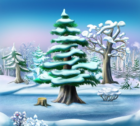 Snow-covered Pine Tree in a Winter Forest. Handmade illustration in a classic cartoon style. Stock Photo