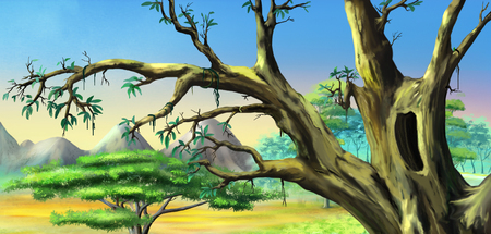 African Tree with Big Hollow against Blue Sky in a African national park. Digital Painting Background, Illustration in cartoon style character.
