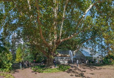 Odessa, Ukraine - 11-10-2018. Green Corner of the old botanical garden in Odessa, Ukraine, on a sunny autumn day