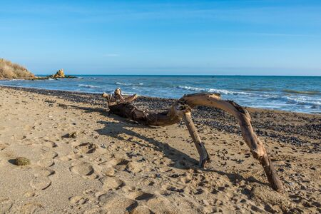 Big snag on the beach on a warm sunny autumn day in Odessa, Ukraine