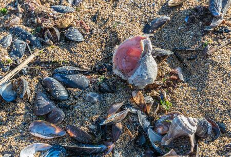 Empty rapana by the sea on a sunny autumn day Imagens
