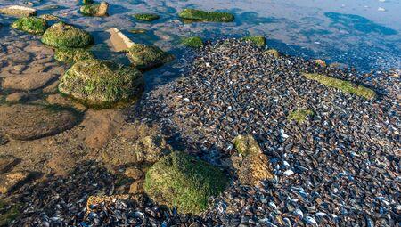 Sea coast dotted with mussel shells on the seashore near Odessa, Ukraine