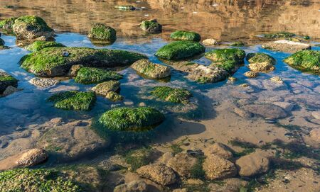 Green algae on the rocks at the edge of the sea on a sunny autumn day