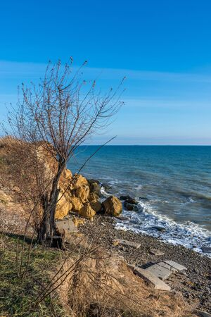 Bare tree on the slope near the sea shore on a sunny summer day