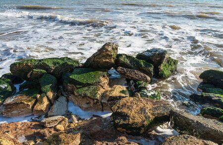 Stones covered with green algae on the Black Sea coast near the village of Fontanka, Ukraine