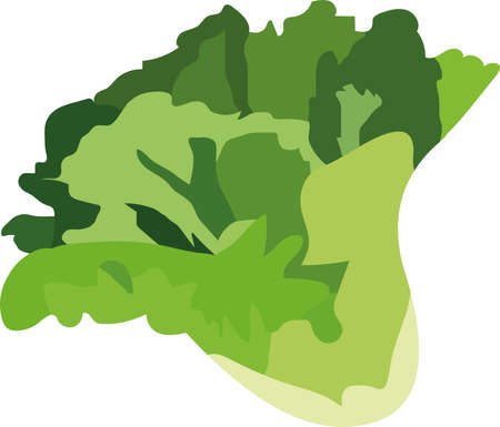 Vector illustration of a lettuce vegetable
