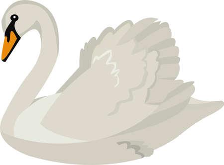 Vector illustration of a beautiful cartoon swan