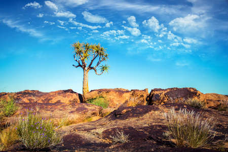 Quiver tree in rocky desert with cloudy sky
