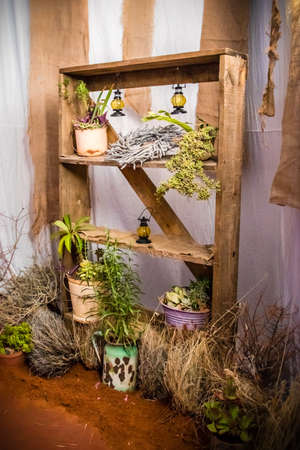 Old wood shelve with succulents Stock Photo