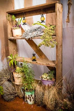 Old wood shelve with succulents Banco de Imagens