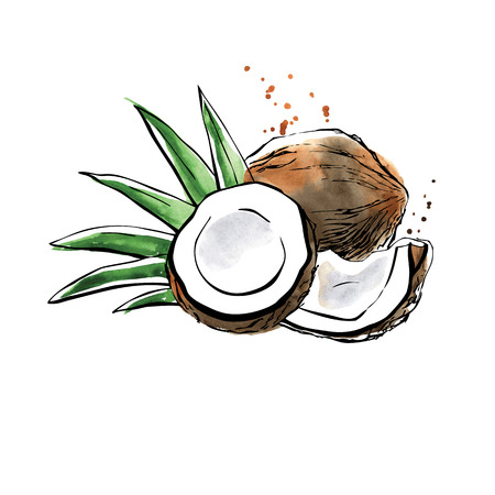 copra: Vector illustration of super food Coconut. Organic healthy food. Black outlines and bright watercolor stains, splashes and drips. Hand drawn isolated objects on white background.