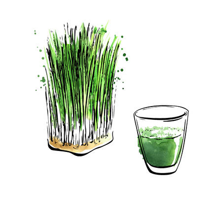 Vector illustration of super food Wheatgrass. Organic healthy dietary supplement. Hand drawn isolated objects on white background. Black outlines and bright watercolor stains, splashes and drips.