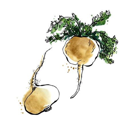 Vektor-Illustration der Super-Lebensmittel Peru Maca. Organische gesundes Essen. Hand isolierte Objekte auf weißem Hintergrund gezeichnet. Schwarzer Umriss und helle Aquarellflecken und tropft.