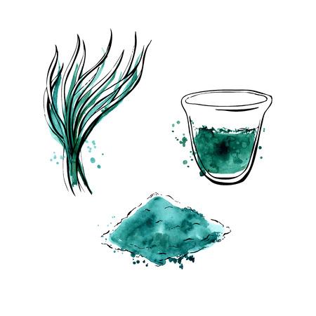 algas marinas: Ilustración del vector de Spirulina súper alimento. suplemento dietético saludable orgánica. Dibujado a mano objetos aislados sobre fondo blanco. contornos negros y manchas de acuarela brillante y goteos. Vectores
