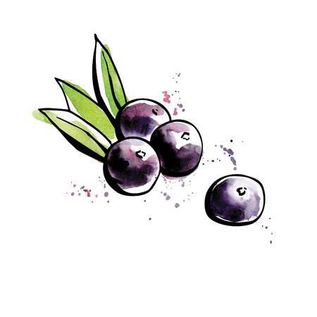 Vector illustration of super food Acai berry. Organic healthy dietary supplement. Black outlines and bright watercolor stains, splashes and drips. 일러스트
