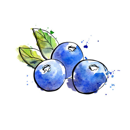 supplement: Vector illustration of super food Blueberry. Organic healthy dietary supplement. Black outlines and bright watercolor stains, splashes and drips.