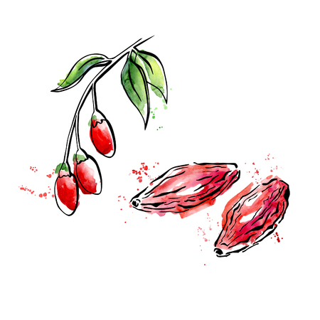 Vector illustration of super food Goji berry. Organic healthy dietary supplement. Black outlines and bright watercolor stains, splashes and drips.