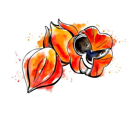 Vektor-Illustration der Super-Lebensmittel Guarana. Organische gesundes Nahrungsergänzungsmittel. Schwarzen Konturen und hellen Aquarell Flecken, Spritzer und Tropfen. Standard-Bild - 51445086