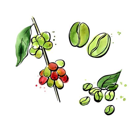 Vector illustration of super food Green coffee. Organic healthy dietary supplement. Black outlines and bright colorful watercolor stains, splashes and drips. Isolated on white background.