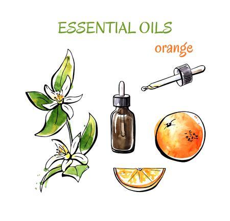 Vector illustratie van oranje etherische oliën. Tak met bloemen, vruchten, flessen en flessen. Set hand getekende aquarel voorwerpen geïsoleerd op een witte achtergrond.