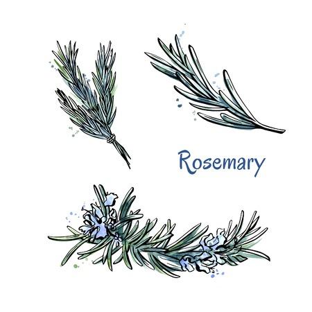 Wektor doodle zestaw szkiców Rosemary. Kwiaty i ręcznie rysowanych elementów wyizolowanych na białym tle.