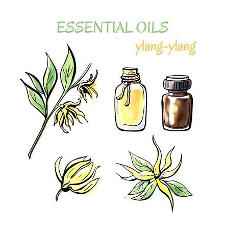 Vector illustration of Ylang-ylang essential oil. Branch with flowers, petals, flasks and bottles. Set of hand drawn objects isolated on white background. Black outline and watercolor stains and drips