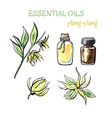 Vector illustratie van Ylang-ylang essentiële olie. Tak met bloemen, bloemblaadjes, flacons en flessen. Set van de hand getekende objecten op een witte achtergrond. Zwart overzicht en waterverf vlekken en druppels