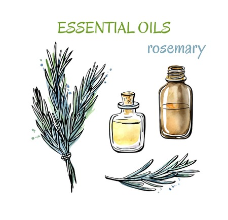Vector illustration of Rosemary essential oils. Herbs, flasks and bottles. Set of hand drawn objects isolated on white background. Black outline and watercolor stains and drips.
