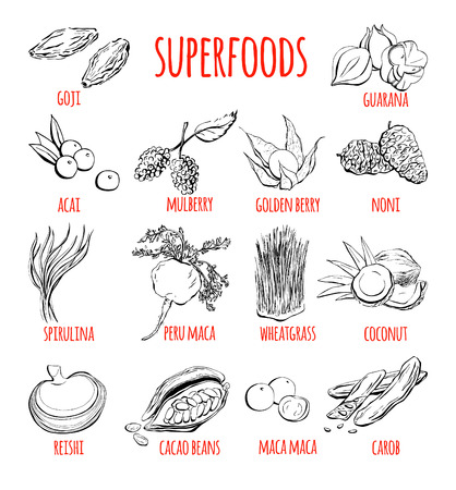 Big set of vector doodle illustrations of the most popular super foods. Collection of hand drawn fruits, plants and berries with black outline isolated on white background. Illustration