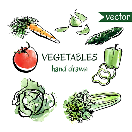 autumn food: Set of vector vegetables with black outline and bright colorful watercolor textured stains. Hand drawn carrot, tomato, spinach, pepper, celery, cucumber, cabbage isolated on white background