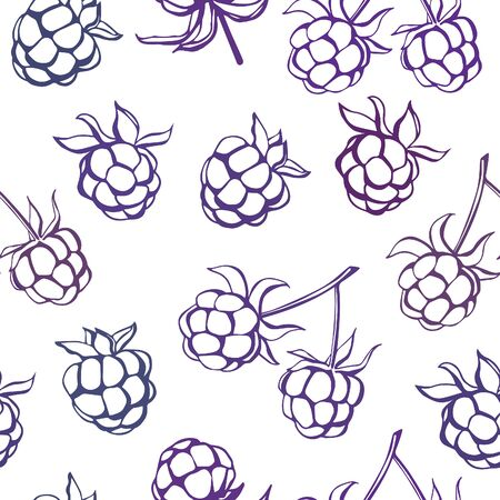 hand outline: Vector seamless pattern with doodle blackberries. Purple, violet and pink hand drawn outline on white backdrop. Cute fruity background for print, fabric, wallpaper, wrapping paper or other design. Illustration