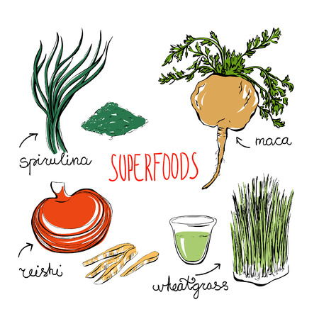 Set of vector doodle illustrations of the most popular super foods. Spirulina, reishi mushroom, wheatgrass, peru maca. Color hand drawn objects isolated on white background.