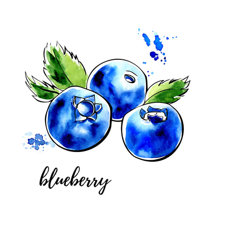 Vector illustration of blueberry. Hand drawn sketch of organic healthy dietary supplement. Black outlines and bright watercolor stains, splashes and drips.
