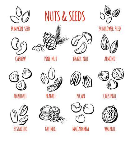 Großer Satz Vektorgekritzelillustrationen der populärsten Nüsse und der Samen. Sammlung Hand gezeichnete Elemente mit dem schwarzen Entwurf lokalisiert auf weißem Hintergrund. Standard-Bild - 86387460