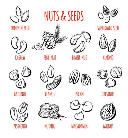 Big set of vector doodle illustrations of the most popular nuts and seeds. Collection of hand drawn elements with black outline isolated on white background.
