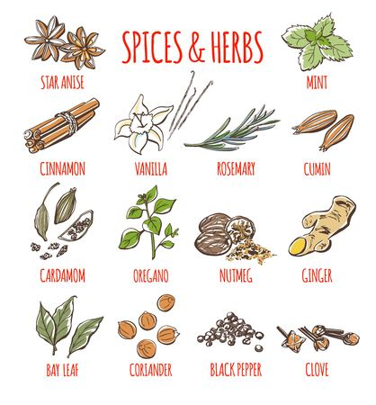 Big set of vector doodle illustrations of the most popular spices and herbs. Collection of color hand drawn seeds, plants and plants isolated on white background. Ilustração